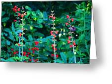 Red Salvias Greeting Card