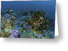 Reef Scene With Coral And Fish Greeting Card by Mathieu Meur