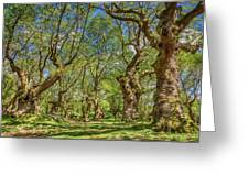 Relaxing Planes Trees Arbor Greeting Card