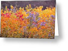 Rich Autumn Colors Greeting Card
