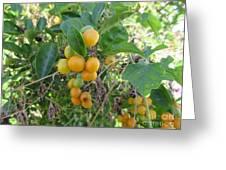 Ripening Citrus Greeting Card