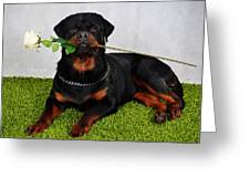 Rottweiler Kuchum Greeting Card