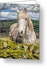 Rustic Horse Greeting Card