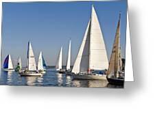 Sailboat Race Greeting Card