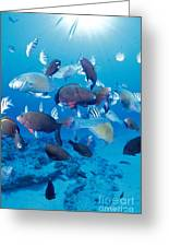 Saipan Marine Life Greeting Card