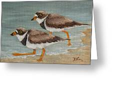 Semipalmated Plover Greeting Card