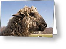 Sheep In Profile Greeting Card
