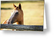 Single Horse Greeting Card