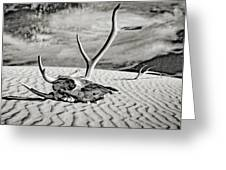Skull And Antlers Greeting Card