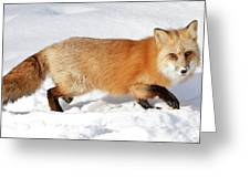 Sneaky Red Fox Greeting Card