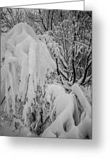 Snow Covered Trees In The North Carolina Mountains During Winter Greeting Card
