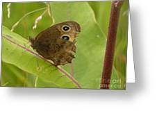 2-spotted Wood Nymph Greeting Card