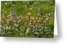 Springtime In South Africa Greeting Card