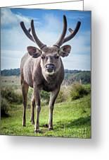 Sri Lankan Sambar Deer Male Greeting Card