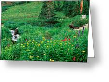Stream And Alpine Flowers, Ouray Greeting Card