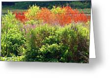 Summer Colors Greeting Card