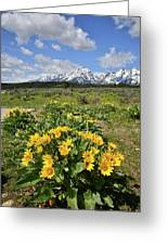 Teton Balsam Root Greeting Card