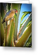 The Gila Woodpecker Greeting Card