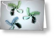 The Thunderbolt Dance Of Rose Butterflies - 1 Greeting Card by Jacqueline Migell