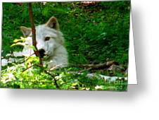 The Wild Wolve Group B Greeting Card