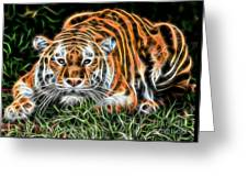 Tiger Collection Greeting Card