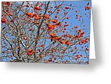 Tree In Benalmadena Greeting Card