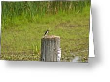 Tree Swallow Greeting Card