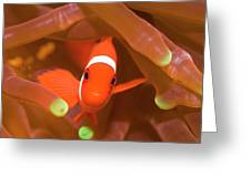 Tropical Fish Clownfish Greeting Card