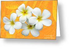 Tropical Frangrapani II Greeting Card