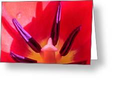 Tulip Porn Greeting Card