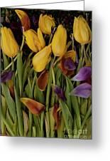 Tulips Wilting Greeting Card