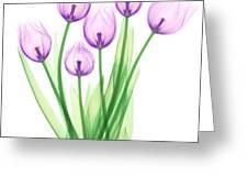 Tulips, X-ray Greeting Card