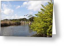 Turkey Creek In Palm Bay Florida Greeting Card
