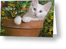 efe261764a Turkish Angora Kitten Photograph by Jean-Michel Labat
