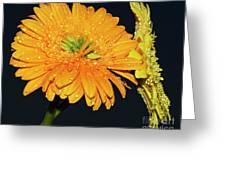 Two Gerbers Greeting Card