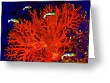 Underwater. Coral Reef. Greeting Card