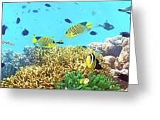 Underwater Panorama Greeting Card