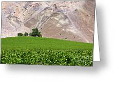 Vines Contrasting With Chiles Atacama Desert Greeting Card