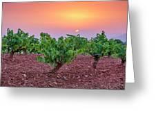 Vineyards At Pink Sunset Greeting Card