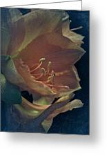 Vintage Amaryllis Greeting Card