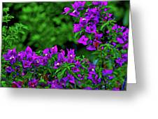 2- Visions Of Violet Greeting Card