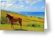 Viti Levu, Coral Coast Greeting Card