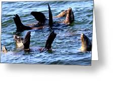 Water Ballet Greeting Card