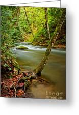 Whatcom Creek Greeting Card by Idaho Scenic Images Linda Lantzy