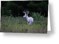 White Buck Greeting Card