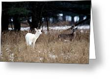 White Buck Brown Doe Greeting Card