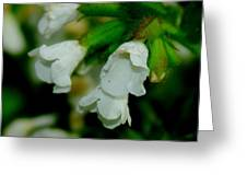 White Buds Greeting Card