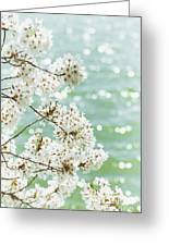White Cherry Blossoms Trees Greeting Card