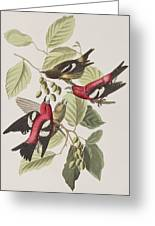 White-winged Crossbill Greeting Card