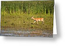 Whitetail Greeting Card